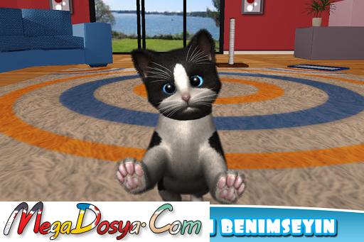 Daily Kitten Sanal kedi hayvan